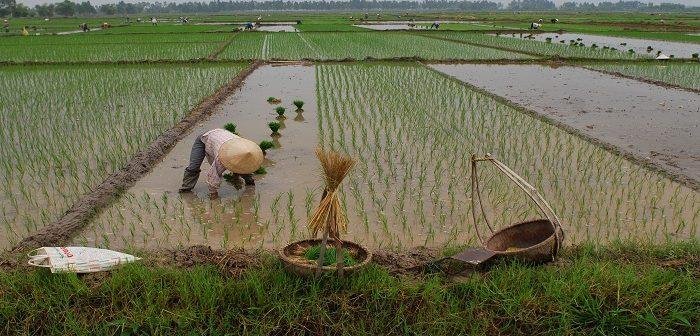Quy định về thuế sử dụng đất nông nghiệp